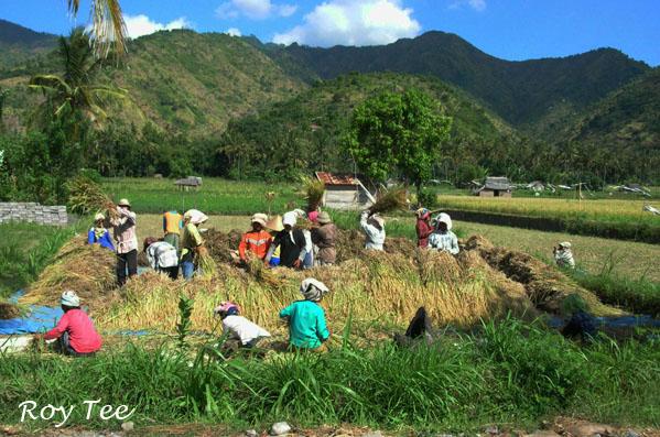 Masyarakat Perkotaan dan Masyarakat Pedesaan | Rizky ...